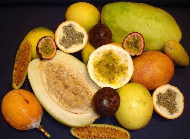 Frutos_de_las_principales_especies_cultivadas_de_Passiflora